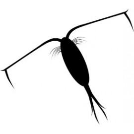 Naklejka wycinana N58 karaluch O