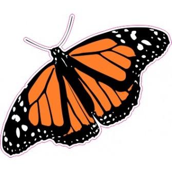 Naklejka ścienna dekoracyjna D14 motyle C