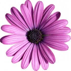Naklejka ścienna dekoracyjna D227 kwiat