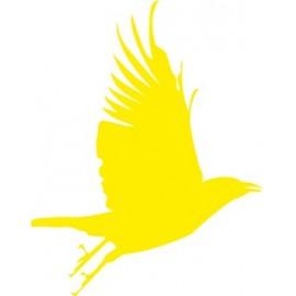 Naklejka ścienna, na ścianę, dekoracyjna N101 ptak
