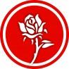 Naklejka - Biała Róża - DE14