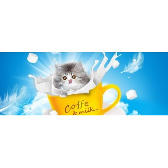 Fototapeta Kotek Coffee and milk 266x100 cm FTE08 - klej gratis